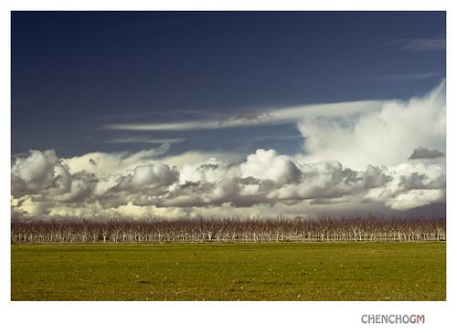 sky naturaleza color colour clouds landscape paisaje cielo nubes árbol albacete