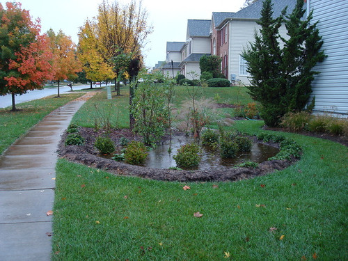 Image of a bioretention area with DEP staff