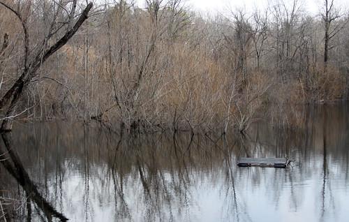 wild nature rice south southern cotton arkansas jonesboro northeastarkansas forrestlwoodcrowleysridgenaturecenter