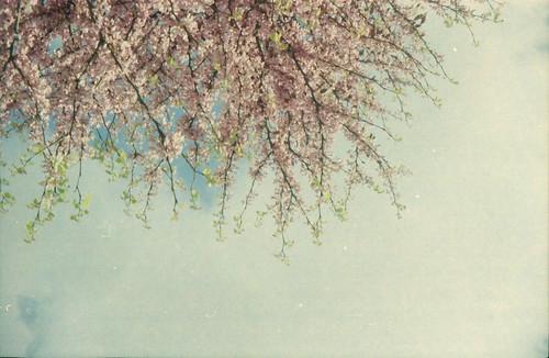 Spring is coming... by EvitaWeed ♥