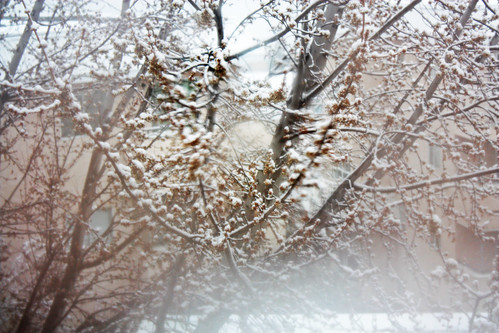 winter snow canada tree window fog arbol spring bc view britishcolumbia nieve steam uch fromkamloops