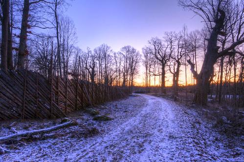 morning trees winter fence dawn sweden path sverige hdr östergötland sigma1020mmf456exdchsm bjärkasäby canoneos40d