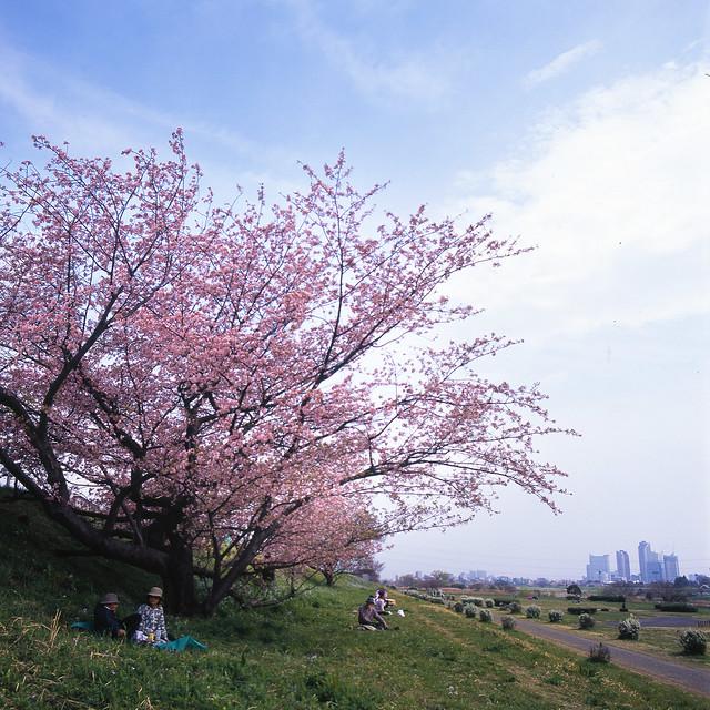 春色の河川敷