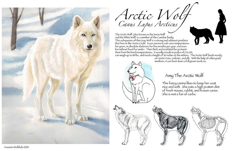 Arctic Wolf Final