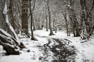 Sparkey Wood