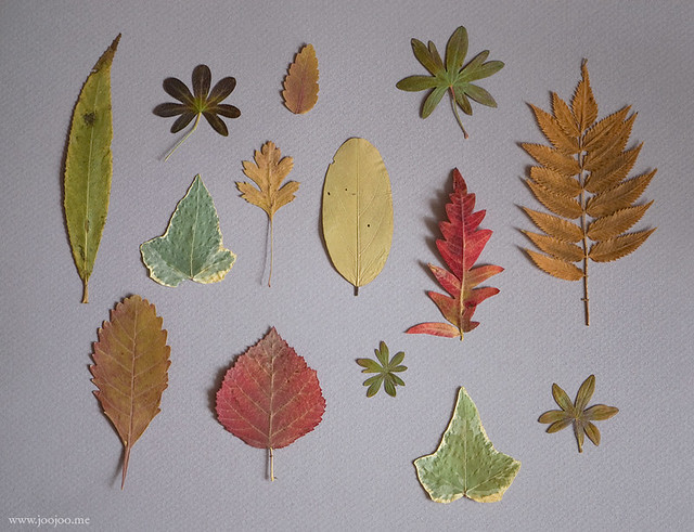 Pressed leaves collection