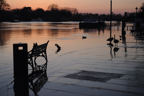Birds on the sunset Thames