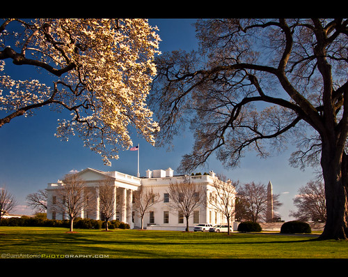 It's Spring Time at the White House - Washington, DC by Sam Antonio Photography