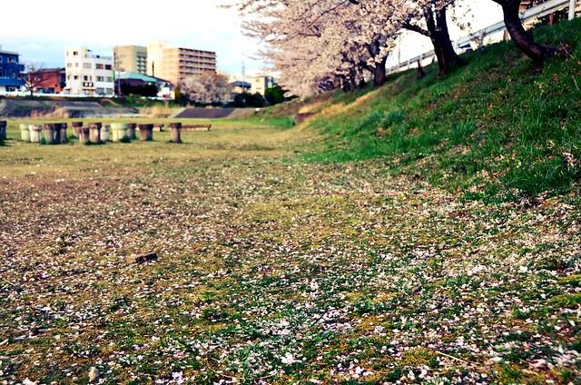 CheeryBlossom