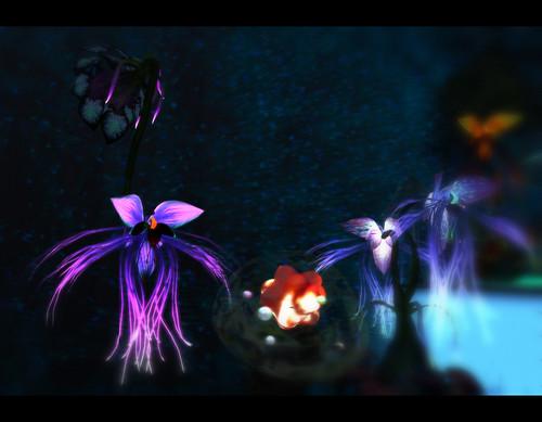 Cerridwens Cauldron: Paradise Bat Orchid