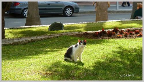 Feliz Sábado Animal by Miguel Allué Aguilar