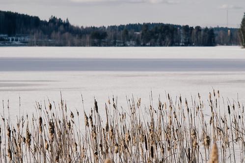 lake finland jyväskylä manualfocus asahipentaxsupertakumar135mmf35 fujifilmxpro1