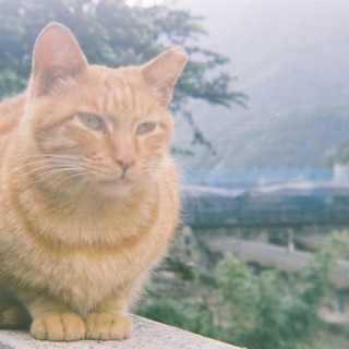 #cat #film #yashica 猴硐貓村