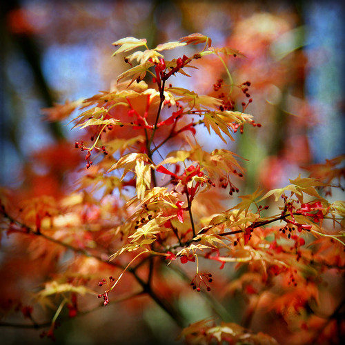 flowers sunlight color nature square maple shadows bokeh textures 7d pdx seedpods ie shining tistheseason vividimagination hbw artdigital trolled memoriesbook bokehwednesday awardtree itisspringagain daarklands magicunicornverybest coth5 daarklandsexcellence exoticimage 1crzqbn netartii lansunchinesegardens