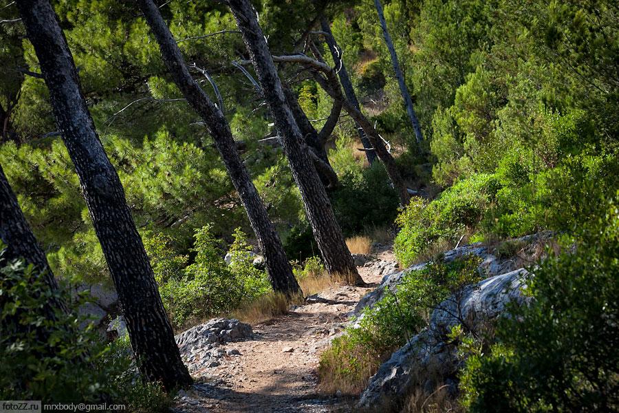 04-Wild-Makarska