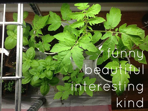 funny beautiful interesting kind, volume 1 | coppertopkitchen.blogspot.com