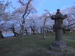 A Dawn Walk With The Blossoms