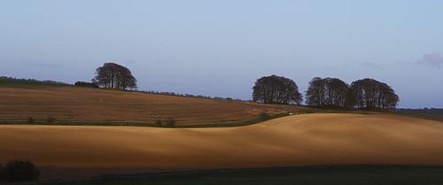 trees sunset field landscape crops wiltshire avebury