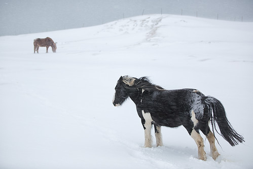 You wouldn´t even send a horse out in weather like this