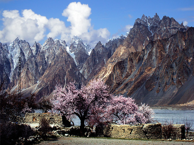 The earth is recieting the song of Spring.Passu Hunza.