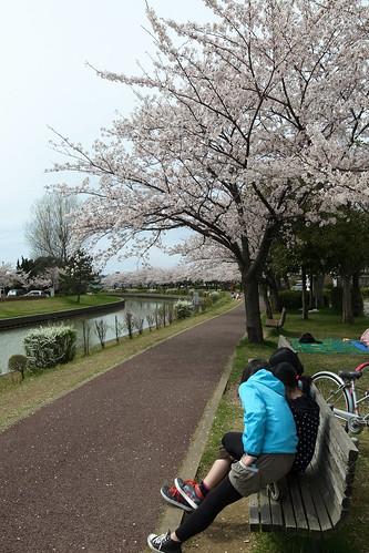 桜の花、舞い上がる道を 2013