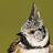 the Fotos de Aves group icon