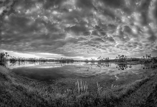 blackandwhite bw panorama usa lake reflection water sunrise landscape ir dawn orlando florida infrared hdr centralflorida orlandowetlandspark
