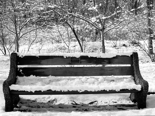 Snow Bench #Nemo