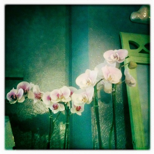 Orchids on the mantle