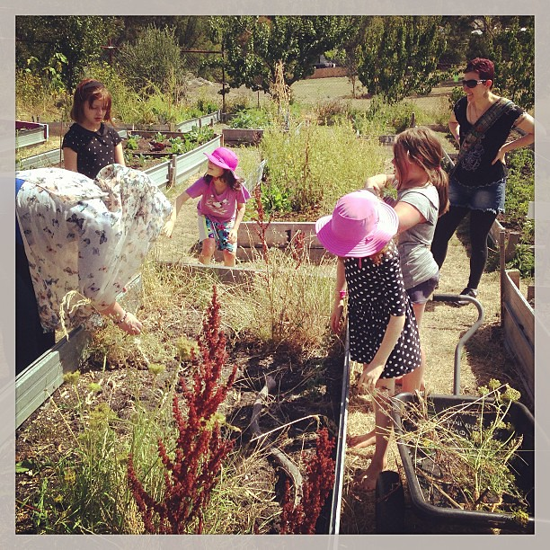 Tending the garden at co-op #unschooling