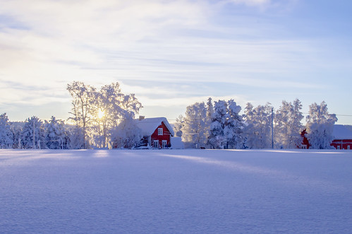 winter nature finland landscape reindeer nikon farm torassieppi d7000