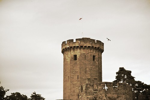 Falconry at Warwick Castle