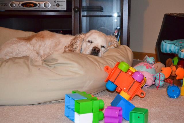 molly near toys