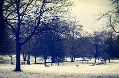 The Snow in Green Park