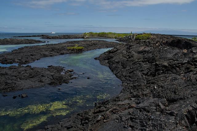 Galapagos: Isla Isabela