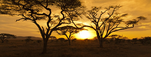 africa travel sunset vacation sky orange sun holiday tree landscape tanzania nationalpark amazing safari serengeti acacia serengetinationalpark amazingsky acaciatree photographyforrecreation