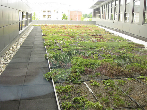Image of a green roof at the Universities at Shady Grove.