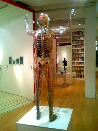 Female body model at Wellcome Collection London