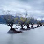 Glenorchy bushes-2