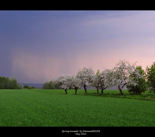 trees sunset sky storm green nature grass weather landscape spring colours poland polska orchard jeziorsko brodnia