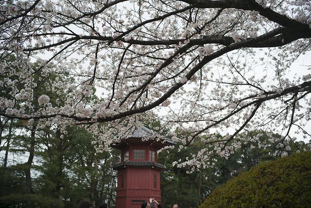 哲学堂公園の桜2