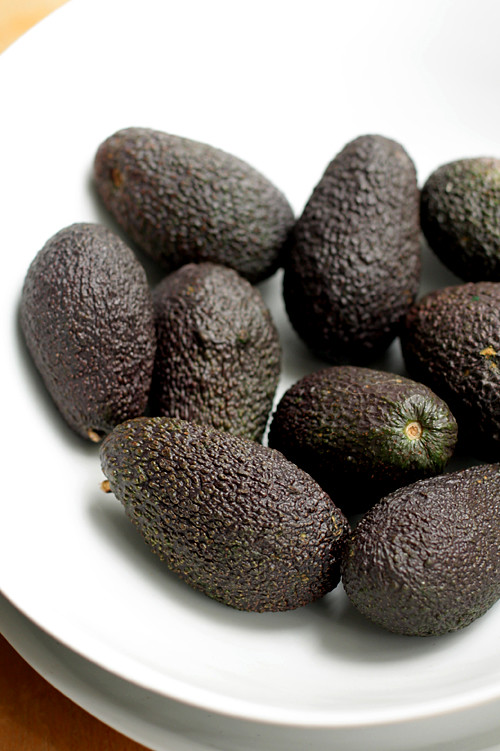 Haas avocados for guacamole