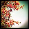 The Red Tree #hipstaedit #hipstamatic #hipstanature... by la petite choux