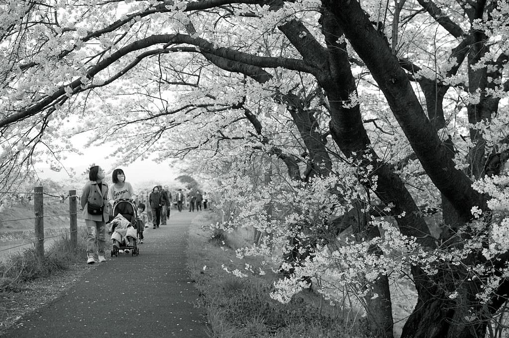 春らしい景色