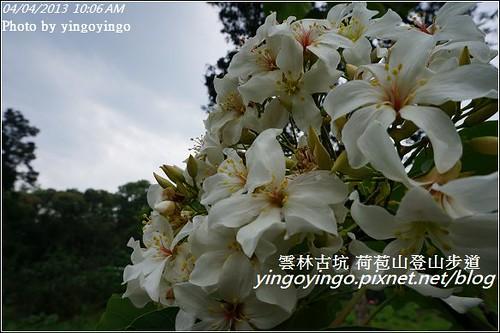 雲林古坑_古坑桐花20130404_DSC004479
