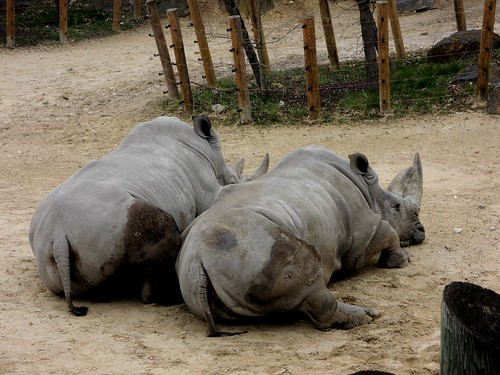 rhino butts