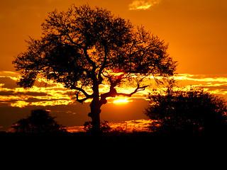 Puesta de sol en el parque nacional Kruger.