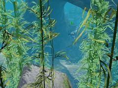 Island Paradise Underwater Fun