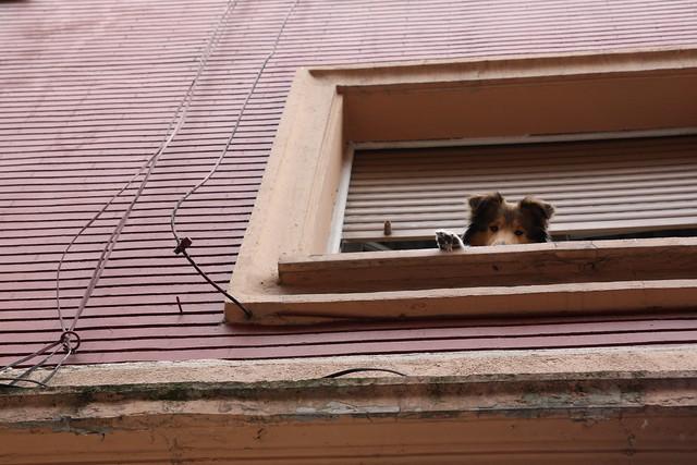 Perrito asomado a ventana