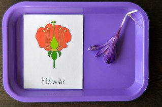 Flower 3 part cards